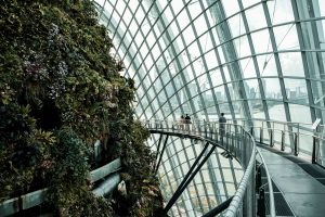 Dentro la Cloud Forest nei giardini Gardens by the Bay a Singapore