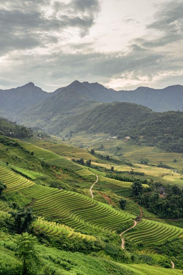 Vista sulle verdi e uniche risaie di Sapa in Vietnam